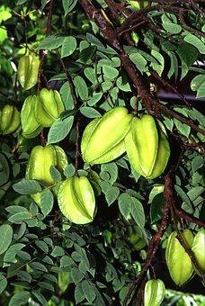 Carambola, Starfruit, Exotic, Fruits, Green