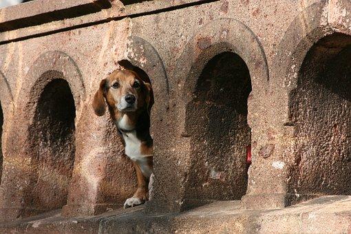 Wall, Animal Portrait, Taxa, Dachshund, Dog, Race