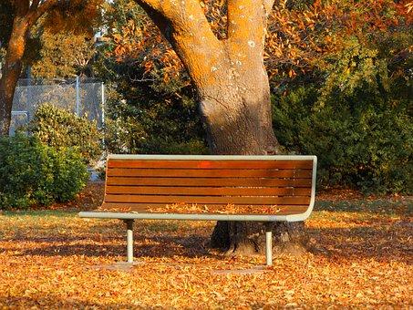 Autumn, Park Bench, Victoria, Australia, Relax, Tree