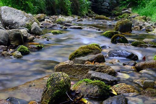 Forest, Mountain, Torrent, River, Nature, Green, Stream