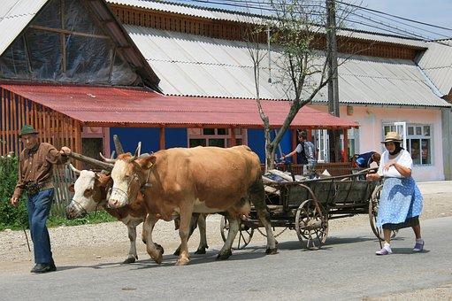Peasantry, Romania, Oxen, Charette