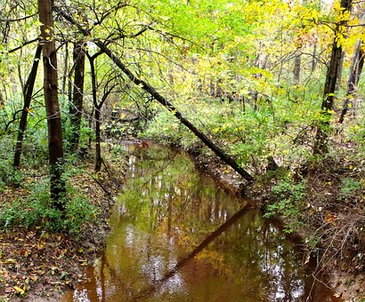 Brook, Rivulet, Trees, Green, Summer, Water