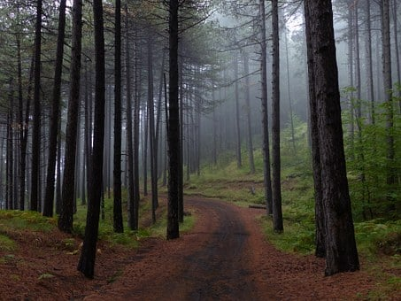 Forest, Trees, Fog, Nature, Landscape, Trail, Mountain