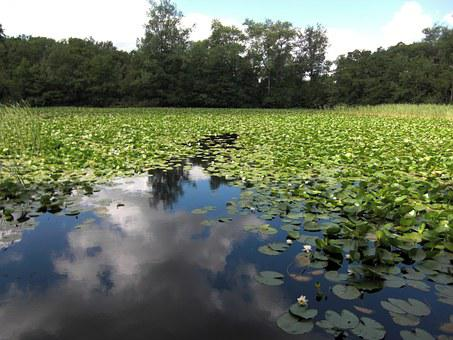 Lake, Water Lilies, Cloud Reflection, Clouds, Water