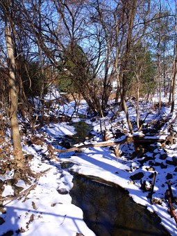 Trees, Forest, Brook, Rivulet, Winter, Water