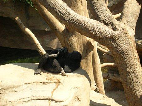 Zoo, Garden, Zool, Zoological Garden, Animals, Mammal