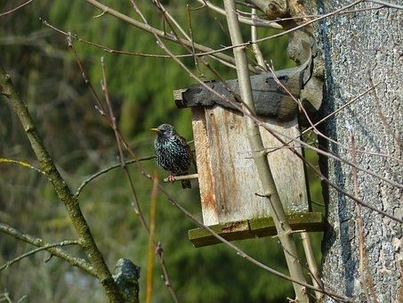 Star, Bird, Animal, Nesting Box, Black, Spotted