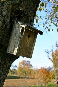 Nesting Box, Tree, Plant, Aviary, Bird Feeder, Breed