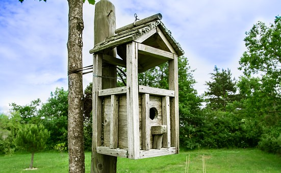 Bird, Box For Birds, House, Nature