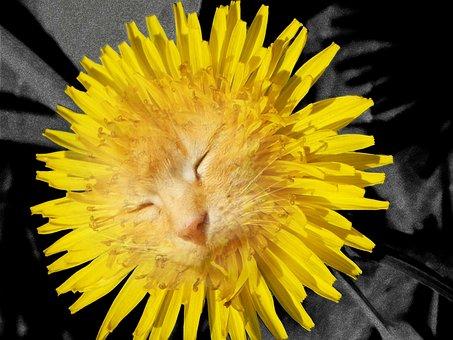 Collage, Photoshop, Image Manipulation, Dandelion, Cat