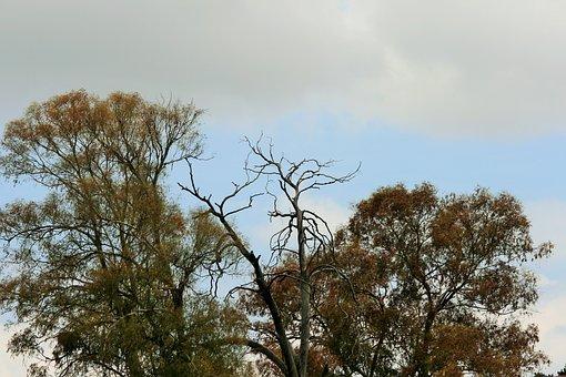 Autumn Starting, Trees, Eucalyptus, Foliage, Autumn