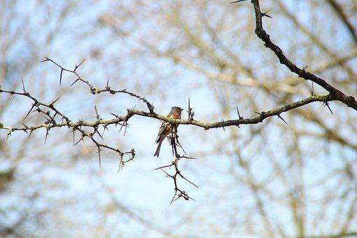 Birds, Nature, Animals, Animal, Fauna, Tit, Nest Box