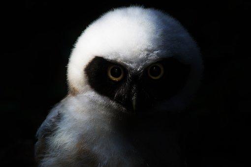Owl, Bird, Animal, Feather, Plumage, Eagle Owl, Nature