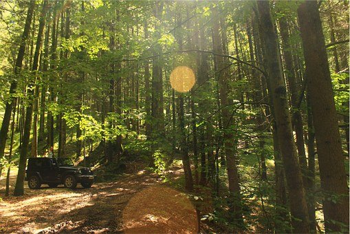 Jeep, Forest, Woods, Sun Rays, Sunshine, Green, Trees