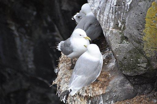 Gulls, Box Wall, Birds, Sitting, Gull, Sea, Nest