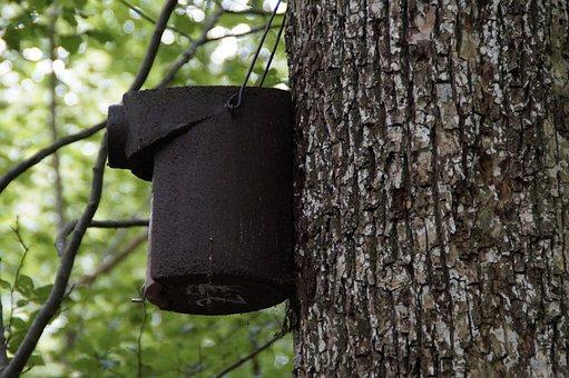 Nesting Box, Breed, Chest, Nest, Nesting Place, Tree