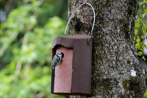 Blue Tit, Nesting Place, Bird, Feather, Nature