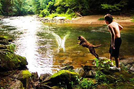 Dog, Chesapeake Bay Retriever, Kids, Pets
