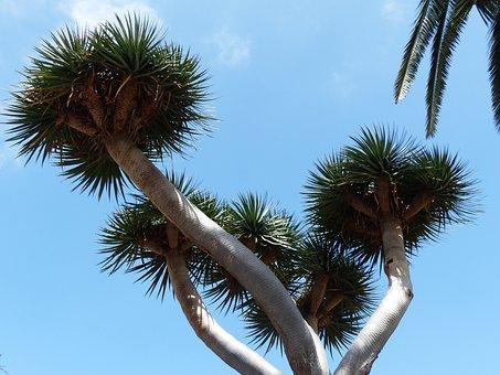 Tree, Crown, Prickly, Tree Tann, Palm