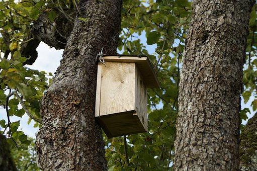 Nesting Box, Nest, Bird, Birds, Log, Tree, Nesting Help