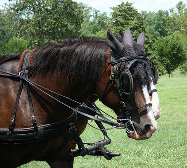 Horses, Working, Hackney, Horse, Work, Farm