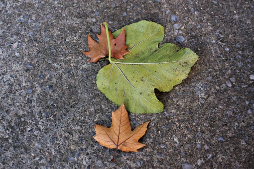 Dried Leaves, Leaves On The Ground, Autumn, Green