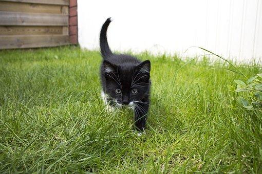 Cat, Maia, Animal, Pet, Cats, Mammal, Feline, Animals
