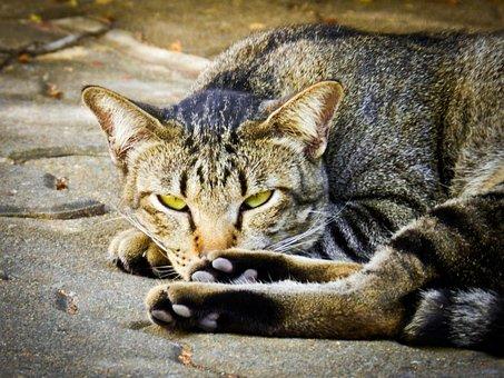 Cat, Feline, Homeless, Fur, Kitten, Wildlife, Mammal