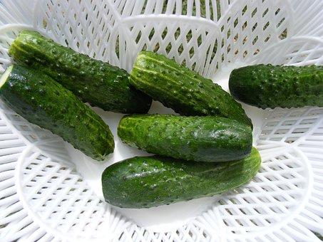 Cucumber, Cucumis, Cucurbitaceae, Fruit, Green, Sativus