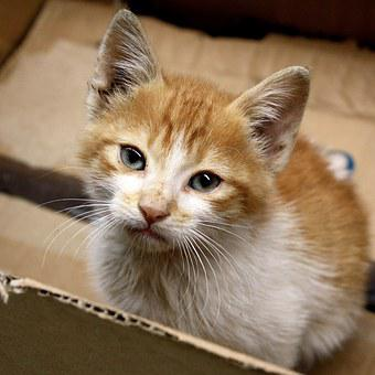 Cat, Kitten, Morocco, Ginger Fur, Box, Homeless