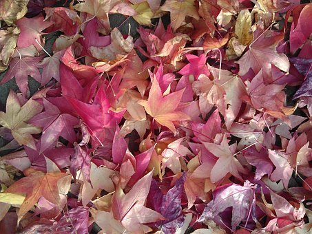 Autumn, Autumn Leaves, Leaves, Fallen Leaves