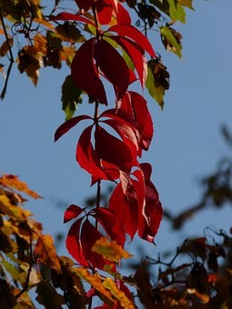 Wine Partner, Wine, Leaves, Red, Autumn