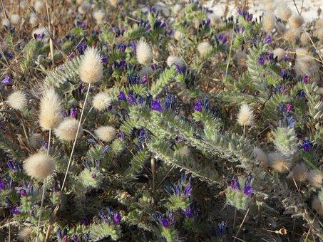 Ground Vegetation, Flora, Grasses, Sand, Mediterranean