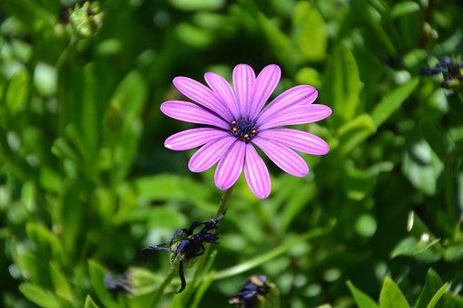 Gerbera, Flower, Plant, Margarite, Garden, Nature