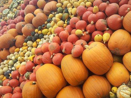 Pumpkin, Halloween, Pumpkins, Pumpkin Varieties, Nature
