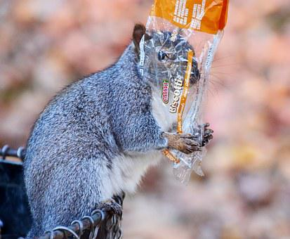 Squirrel, Cookies, Animal, Nature, Searching For Food