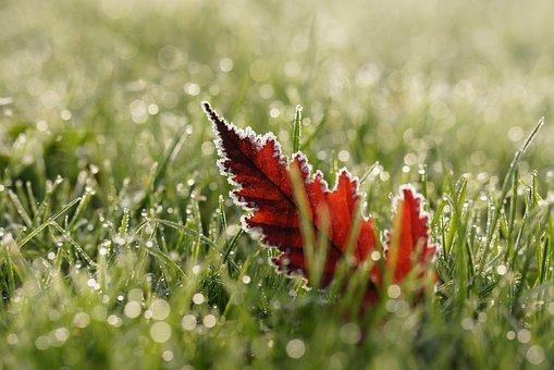 Leaf, Nature, Autumn, Dew, Wet, Frost, Plant, Leaves