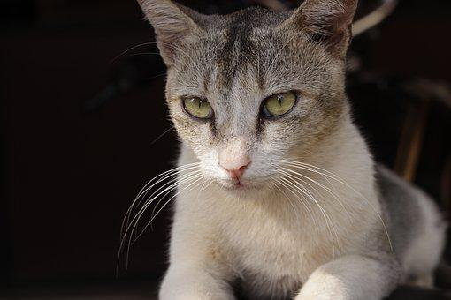 Cat, Pet, Animal, Green Eyes, Feline, Animal Portrait