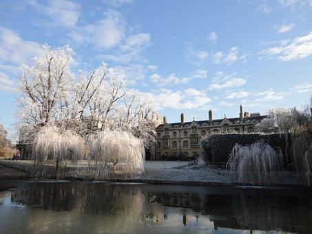 Cambridge, Frost, Zmrożony, Castle, College, Tree