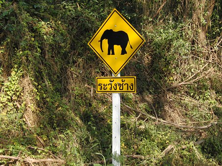 Elephant, Traffic Sign, Warnschild, Attention Elephant