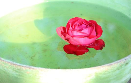 Rose, Floating, Bowl, Flower, Water, Beauty