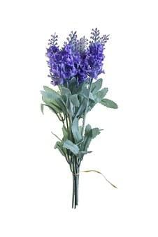 Flower, Purple, Nature, Flowers, Plants, Purple Flower