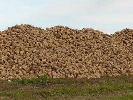 Culture, Sugar Beet, Normandy, France, Heap, Field