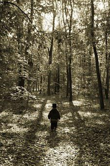 Forest, Trees, Nature, Kid, Child, Small Child