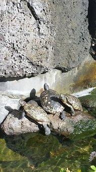 Turtles, Relaxing, Hawaii, Water, Nature, Park, Zoo