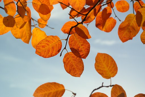 Leaves, Autumn, Orange, Red, Blood Red, Fall Foliage