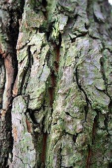 Tree Bark, Bark, Tree, Trunk, Textured, Green Tinge
