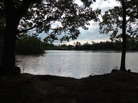 Pond, View, Trees, Shrubs, Water, It Reflects The Sun