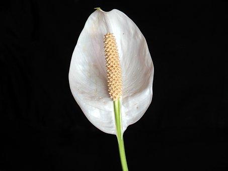 Film's Party, Flowers, White Flowers, White Flower