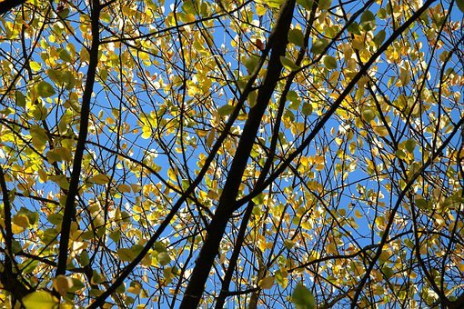 Leaves, Autumn, Yellow, Aesthetic, Branches